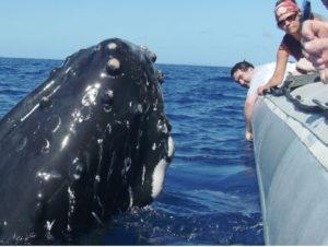 Spy Hopping Whale